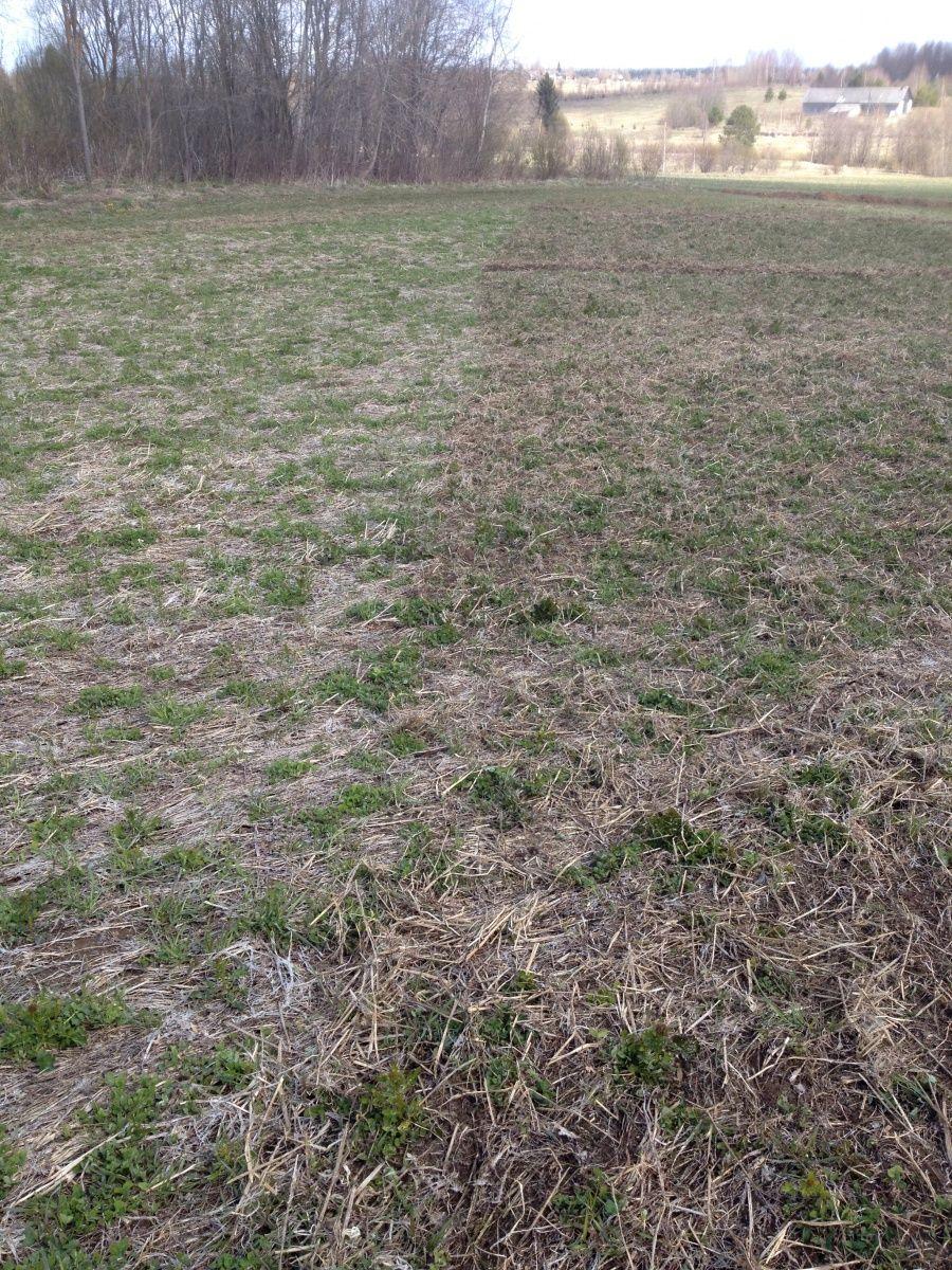 посев травы для сена