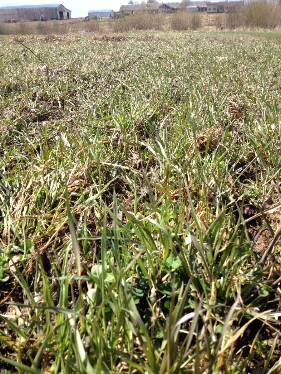 Как сажать газонную траву - подготовка участка